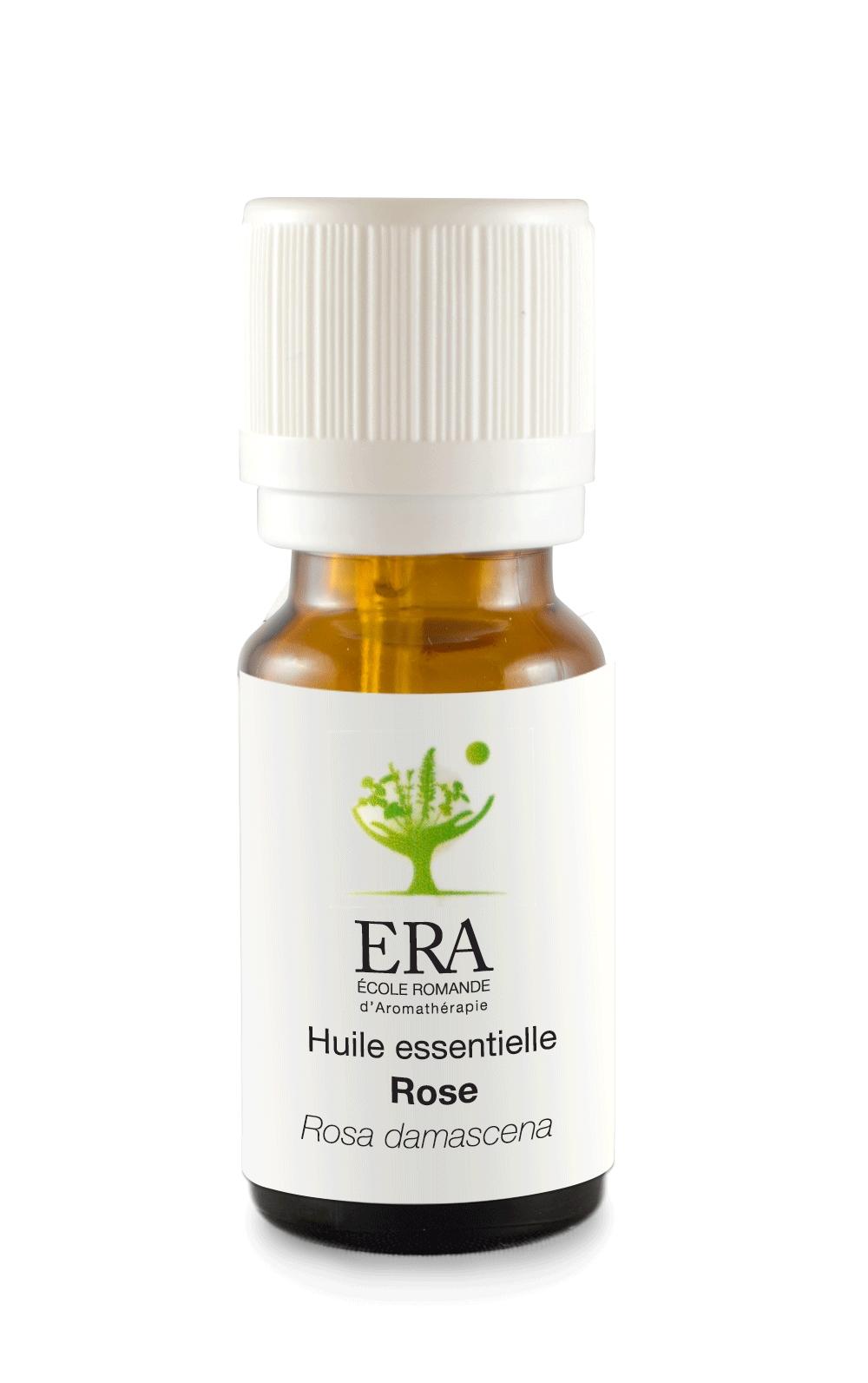 Rose - Rosa damascena - Rosacées