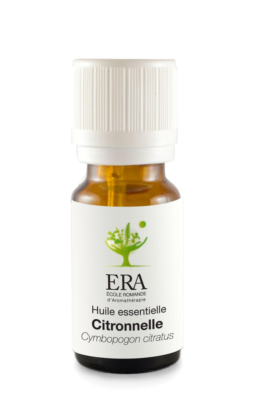 Citronnelle-Cymbopogon citratus